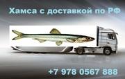Приглашаем оптовиков на путину хамсы осень 2015 Крым РФ Керчь